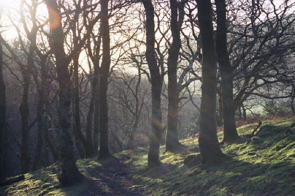 woods497F32EB-006B-BB8C-C2C0-EE972C1AA690.jpg